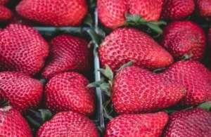 """家里怎么种植草莓?掌握这些种植方法你也可以拥有""""草莓园"""""""